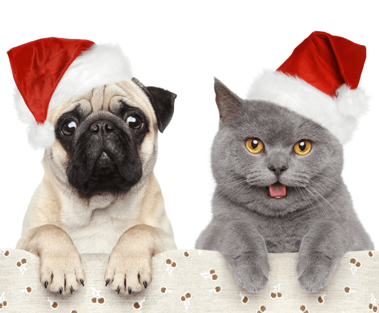 6 Places in Calgary to Get Pet Photos Pets Image