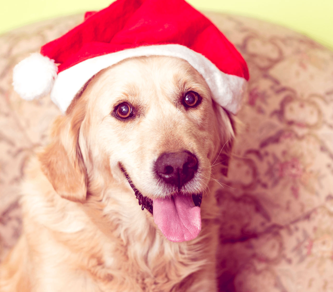 6 Places in Calgary to Get Pet Photos Santa Image