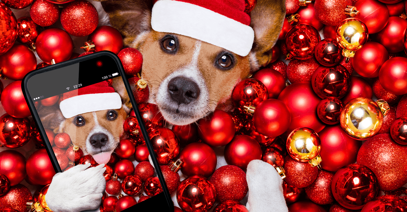 6 Places in Calgary to Get Pet Photos Selfie Featured Image