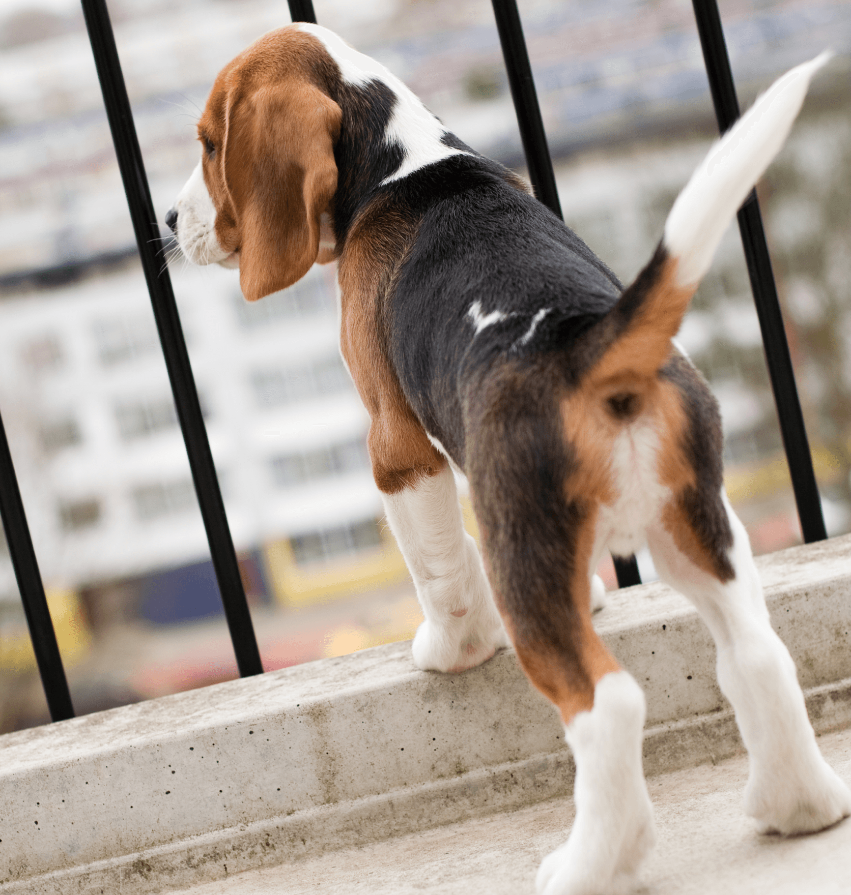Condo Living How to Choose the Right Pet Puppy Image